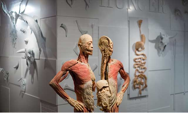 BODIES...The Exhibition for Halloween