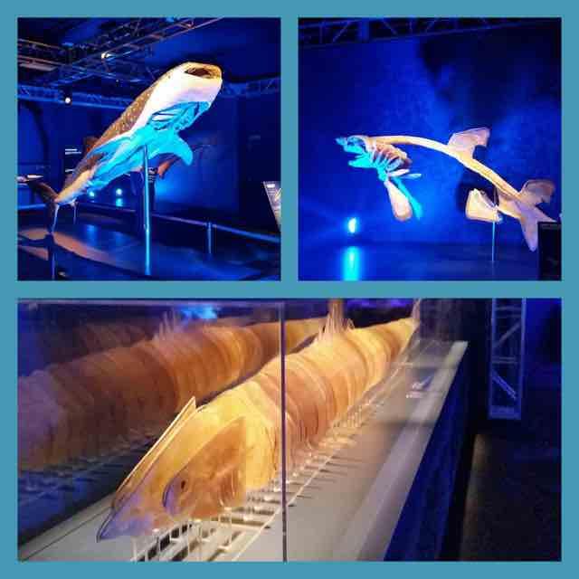Shark Reef Aquarium At Mandalay Bay Las Vegas Kids